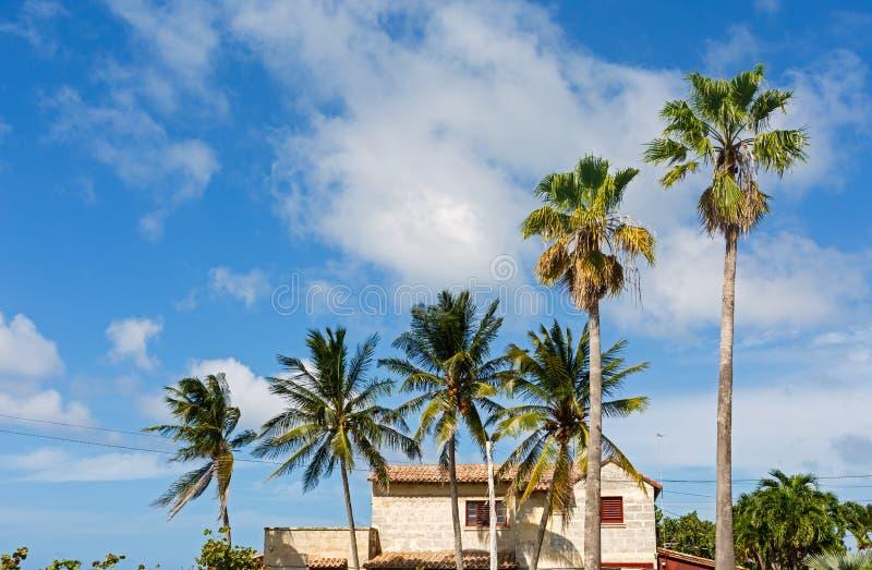 沿海地带海滨别墅在有棕榈树的古巴 免版税图库摄影