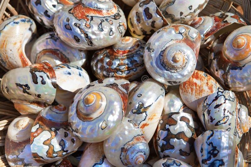 沿海收藏五颜六色的海运壳 免版税库存图片