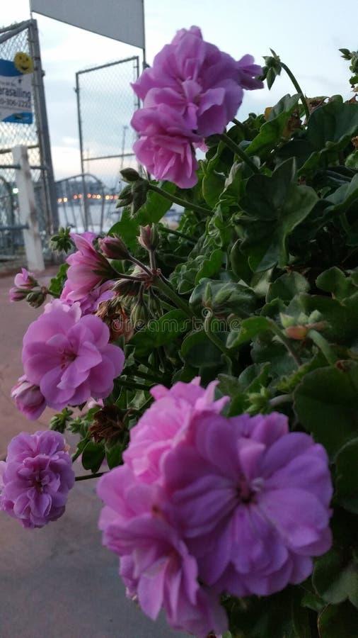 Download 沿海晚上 库存照片. 图片 包括有 沿海, 日落, 起始时间, 夜间 - 72356870