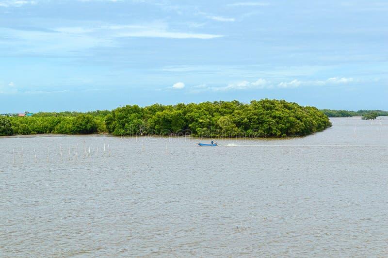 沿海森林保护站点美好的风景视图在泰国的Samutprakarn 库存图片