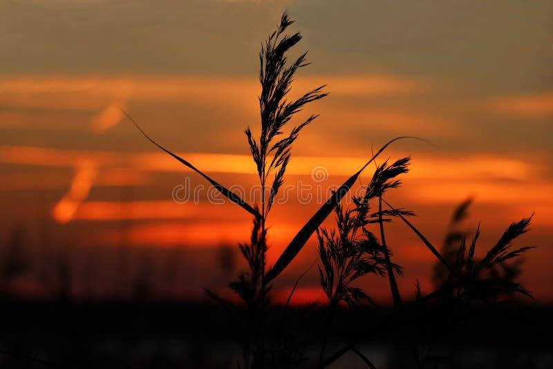 沿海植被在河的背景中日落的 库存照片