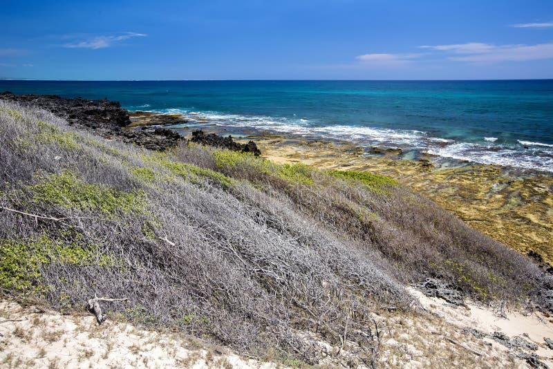 沿海植被风被形成的印度洋 Amoronia橙色海湾,在马达加斯加北部 免版税库存图片