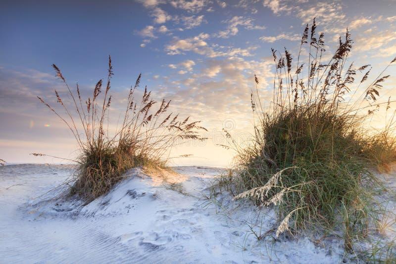 沿海沙子和海燕麦北卡罗来纳日出 库存照片