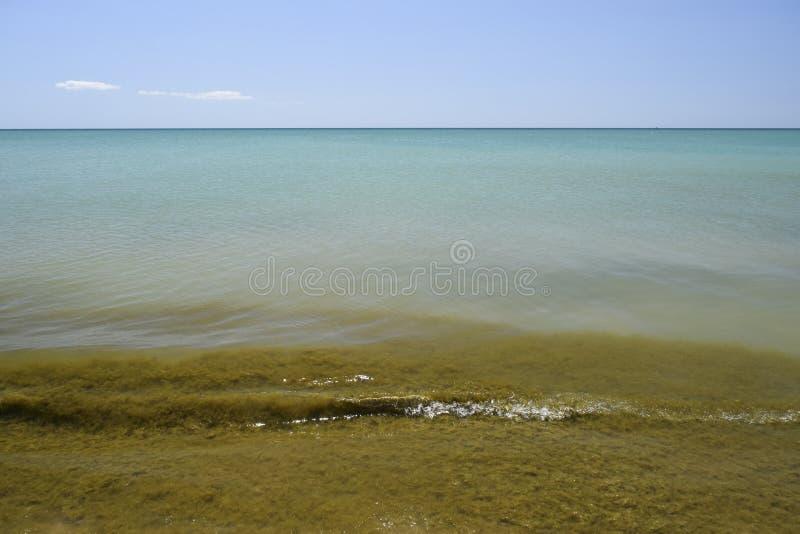 沿海海波浪 与海草的海水 沿海海藻 海bea 图库摄影