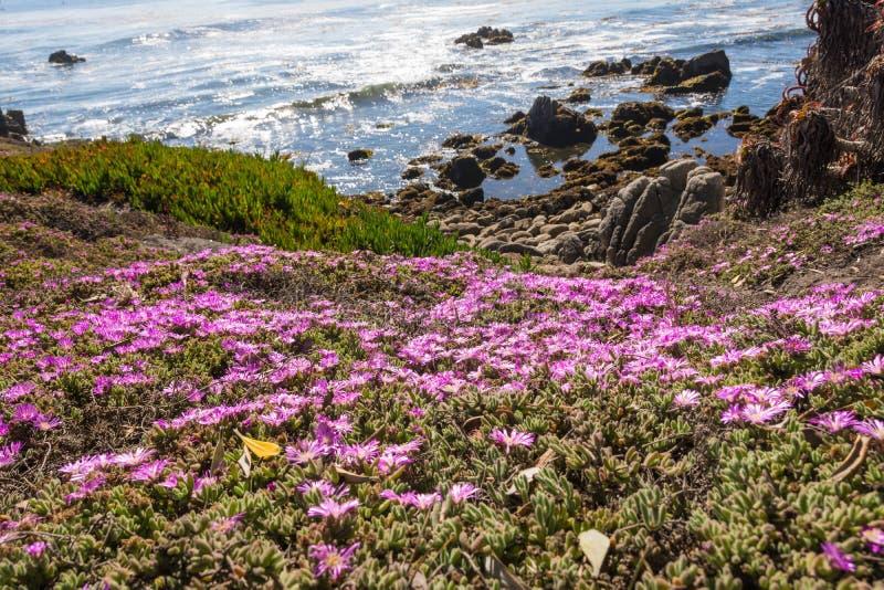 沿海蒙特里,加利福尼亚的花 免版税库存图片