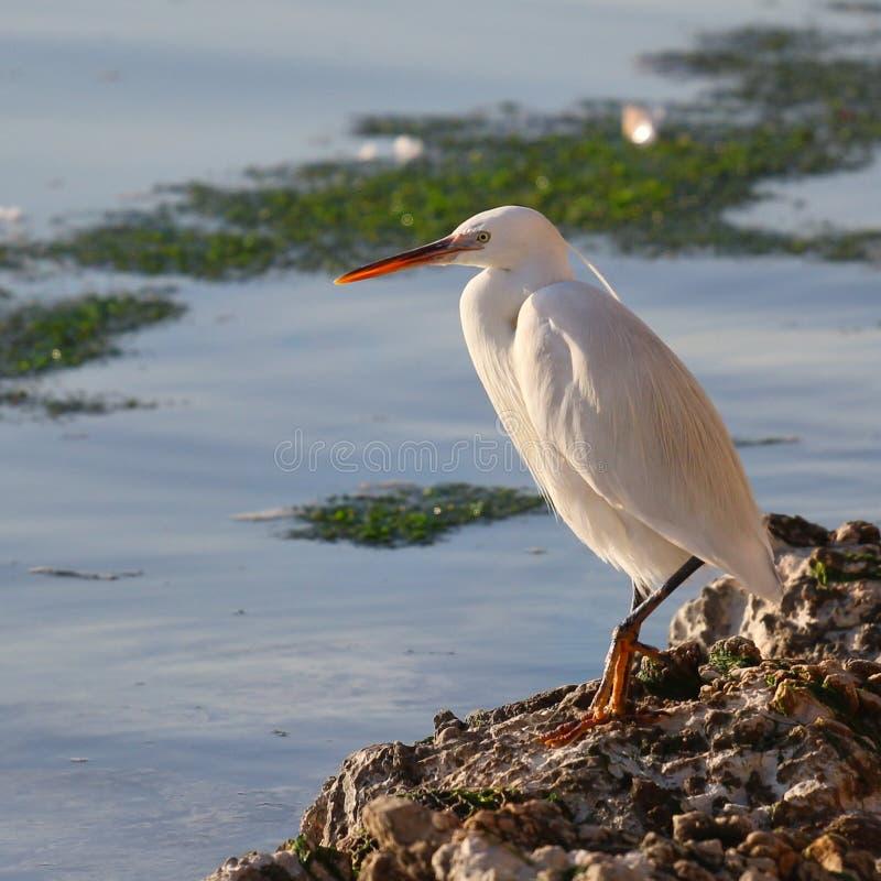 沿海鸟 库存照片