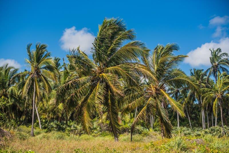 沿海-很多灌木和狂放的植被,厚实的丛林的厚实的密林 图库摄影