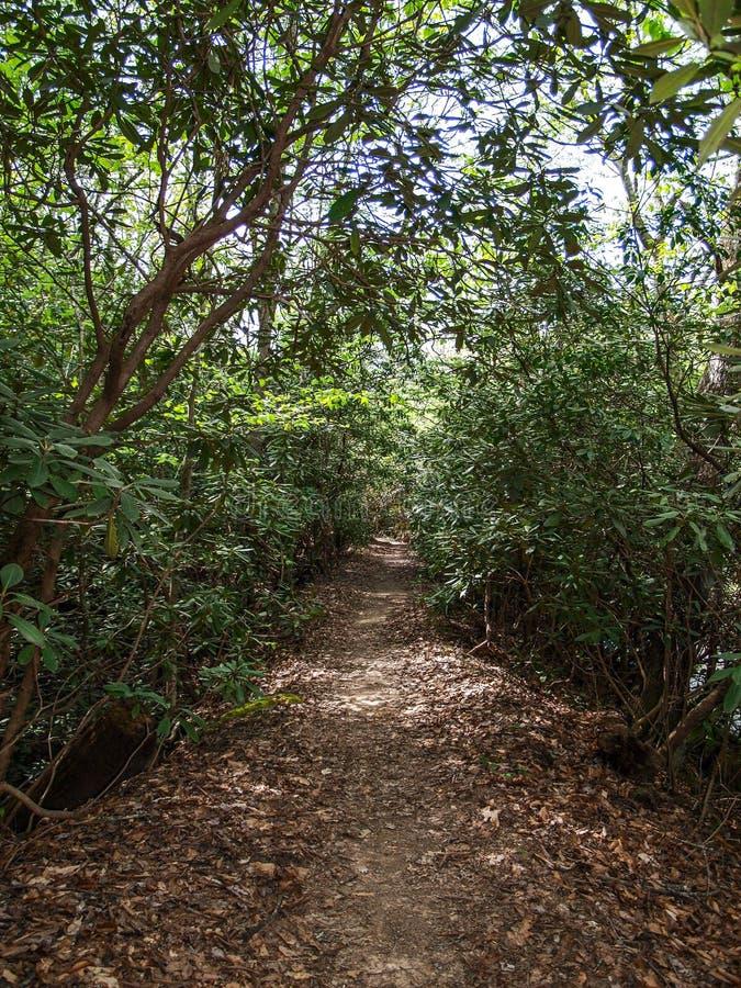 沿淡江的杜鹃花隧道供徒步旅行的小道 免版税库存图片