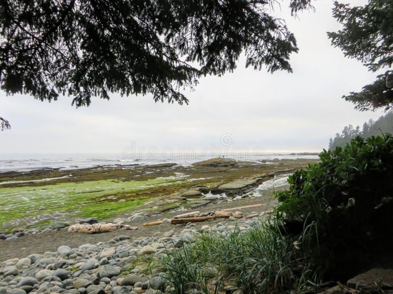沿温哥华岛西海岸的遥远的海滩的看法著名西海岸足迹远足的 图库摄影