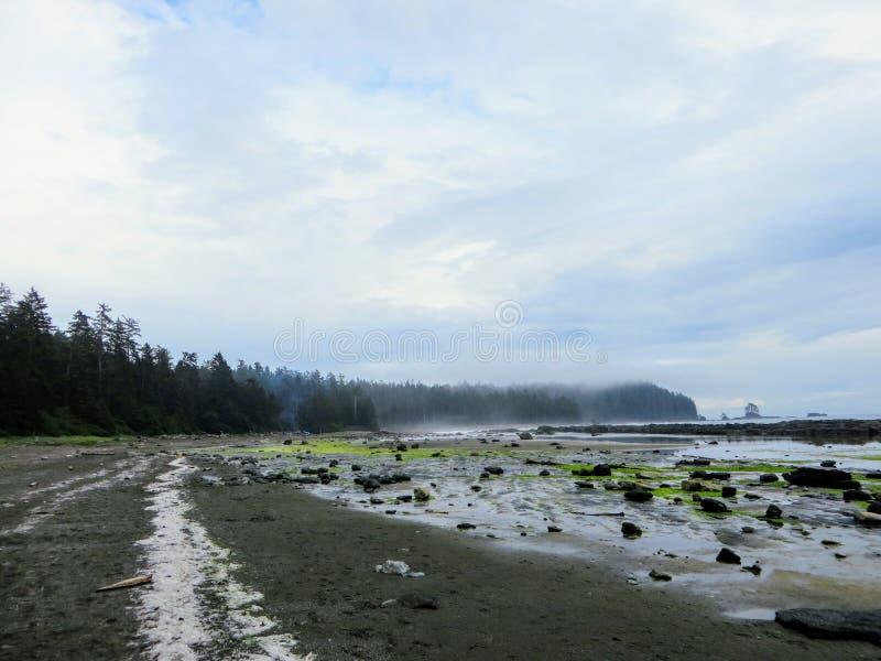 沿温哥华岛西海岸的遥远的海滩的看法著名西海岸足迹远足的 库存图片