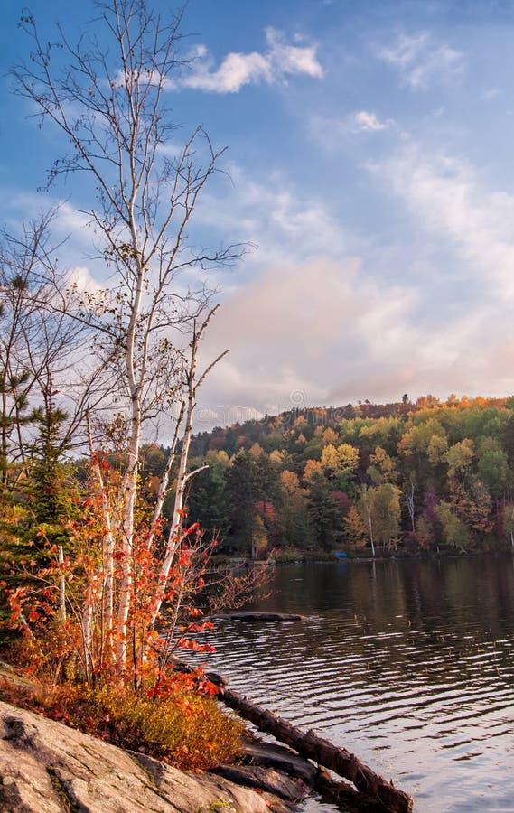 沿着一个湖的桦树有秋天颜色的 免版税库存图片