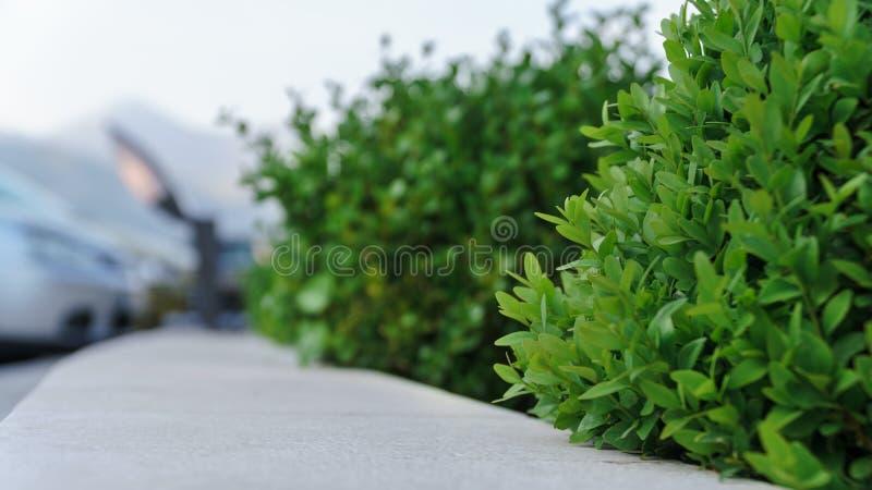沿码头的绿色灌木 库存照片