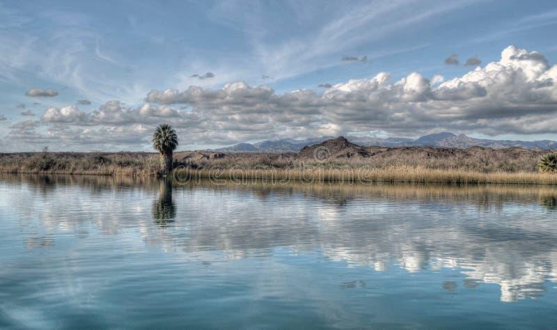 沿科罗拉多河的银行的孤立棕榈树在亚利桑那 库存照片