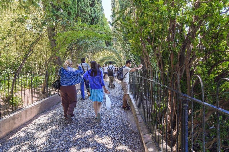 沿赫内拉利费宫庭院的绿色胡同,格拉纳达,西班牙 库存图片