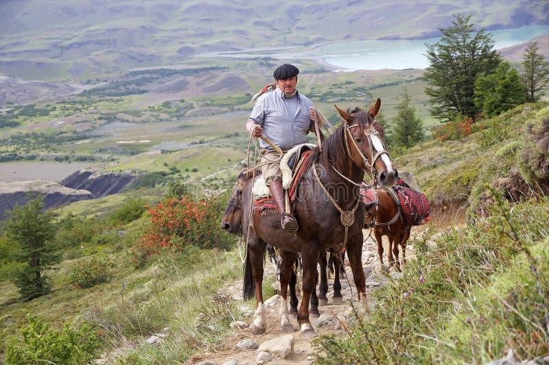 沿足迹的马对托里斯在托里斯del潘恩国家公园的del潘恩,智利巴塔哥尼亚,智利 免版税库存图片