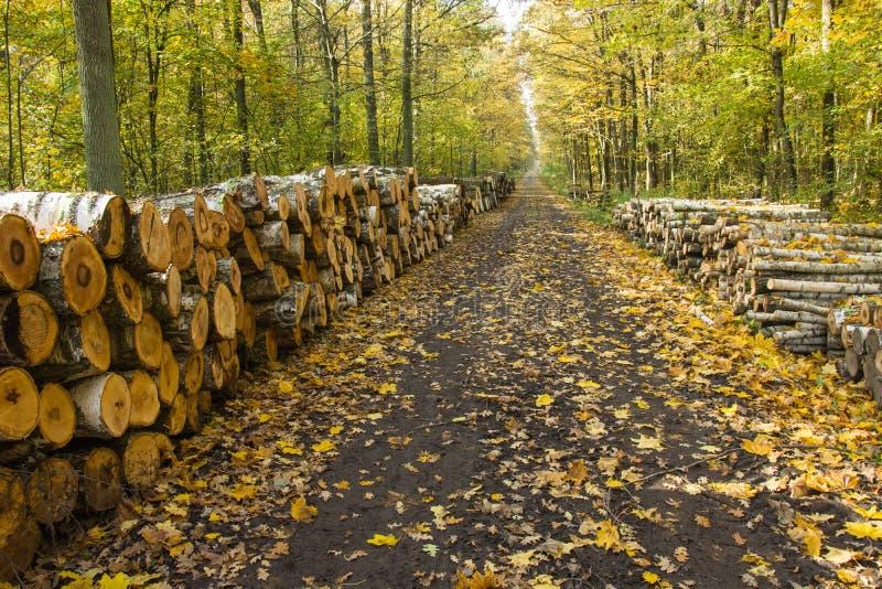 沿路和被切开的木头被安排的秋天森林 免版税库存图片