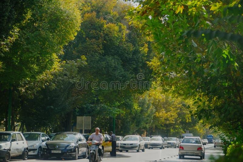 沿路的豪华的绿色树在伊斯法罕,伊朗 免版税库存图片