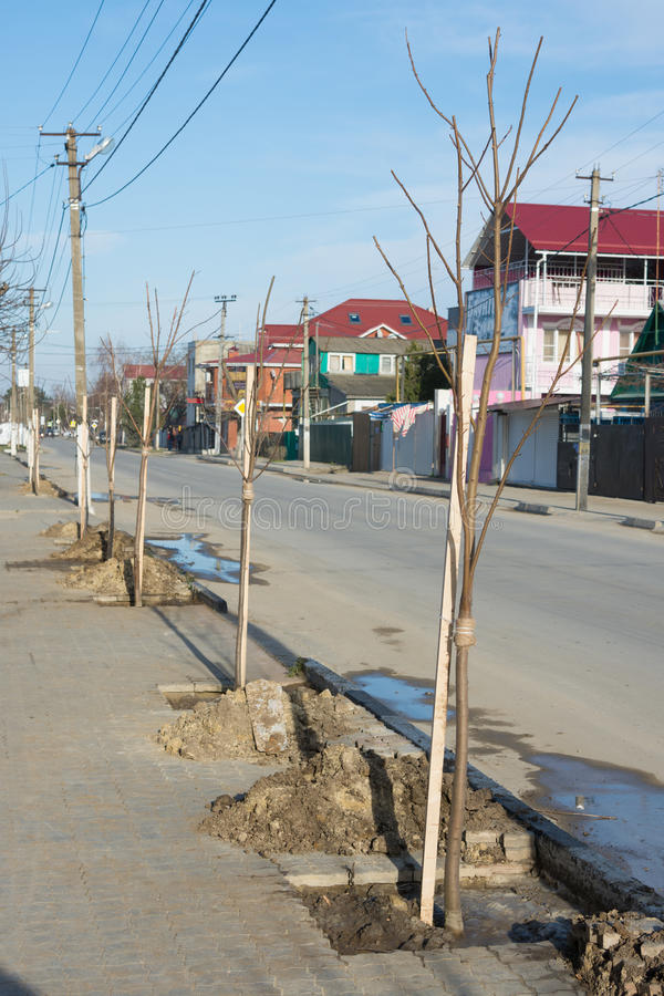 沿路被种植的核桃幼木 免版税库存照片
