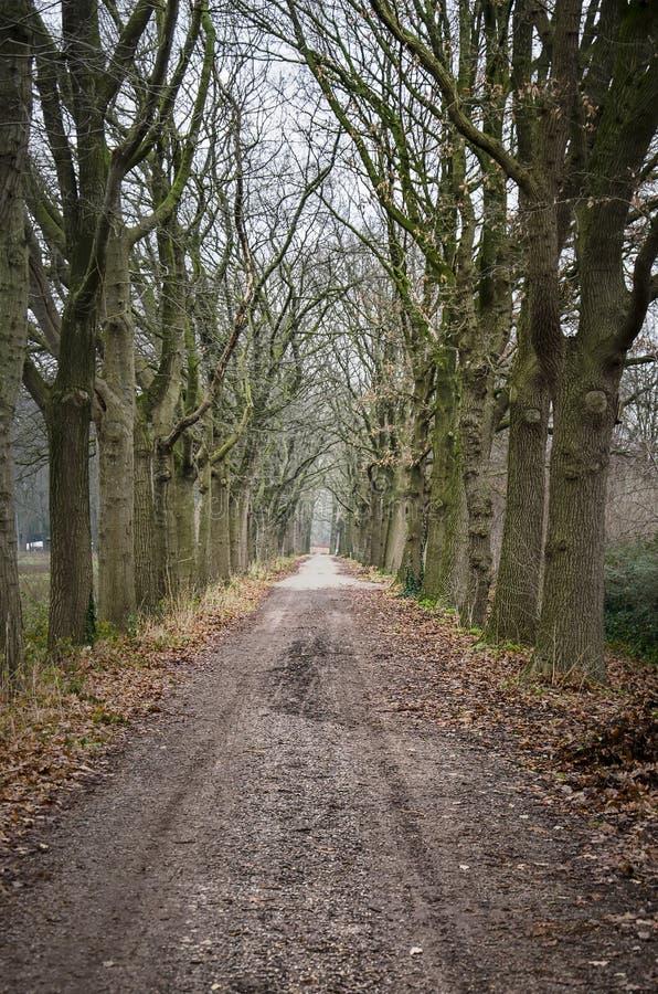 沿途有树的土路 图库摄影