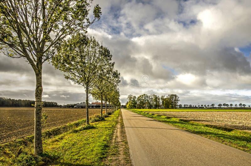 沿途有树的开拓地路 免版税库存照片