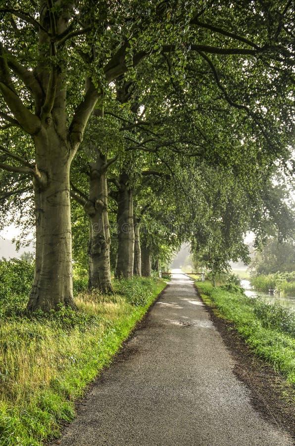 沿途有树的柏油路 免版税库存图片