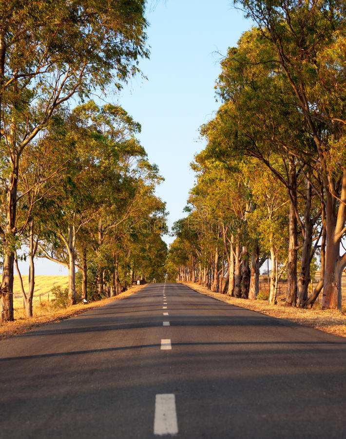 沿途有树的涂焦油路 免版税库存图片