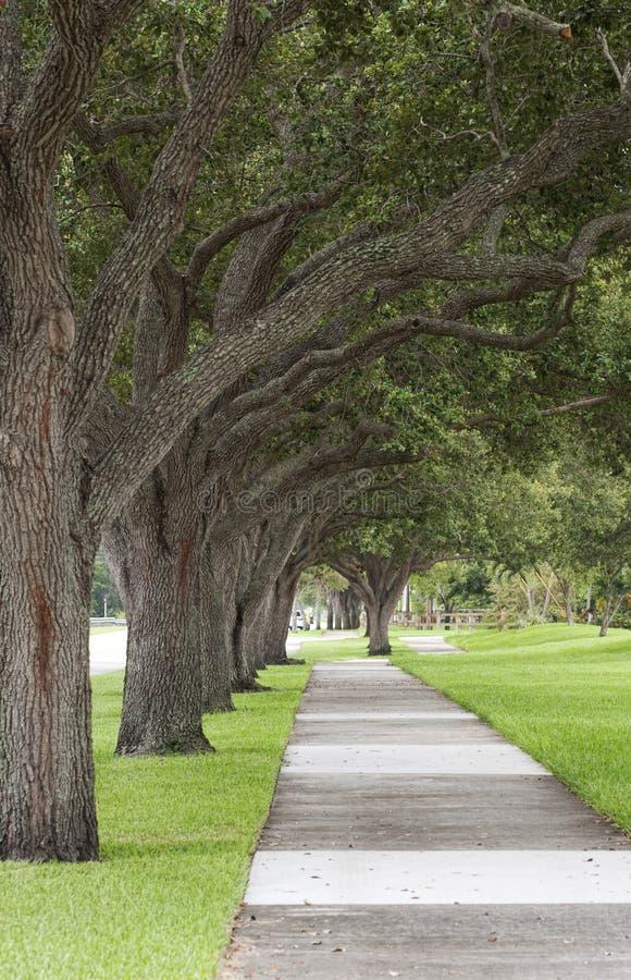 沿途有树的边路 免版税库存图片