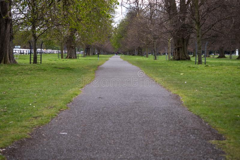 沿途有树的道路穿过凤凰公园在都伯林,爱尔兰 库存照片