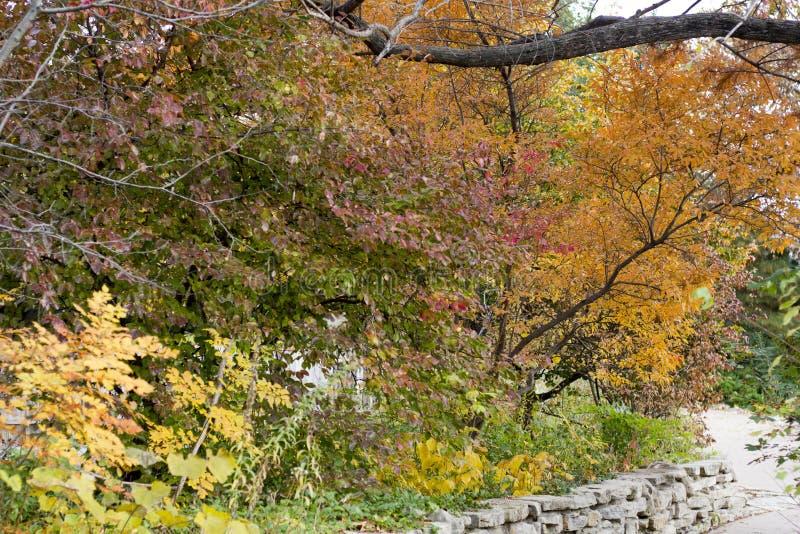 沿道路的红色,黄色和橙色秋天树 库存图片
