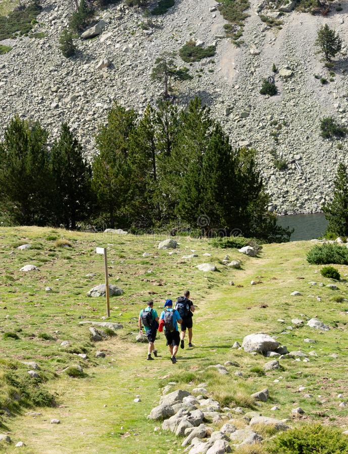 沿道路的远足者步行在森林里 库存图片