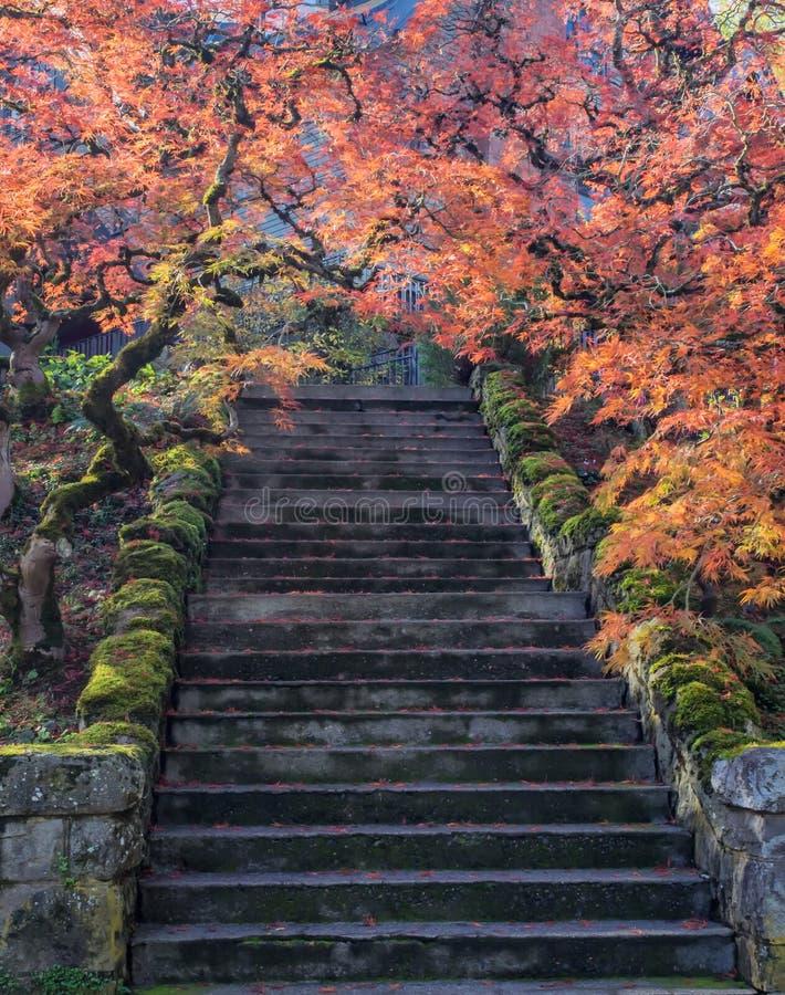 沿阶梯步级的五颜六色的槭树叶子 免版税库存图片