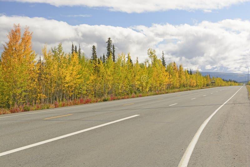 沿阿拉斯加高速公路的秋天颜色 免版税库存图片
