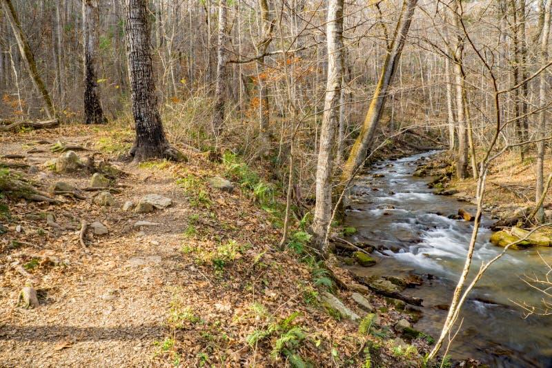 沿鳟鱼小河的供徒步旅行的小道在杰斐逊国家森林里 库存图片