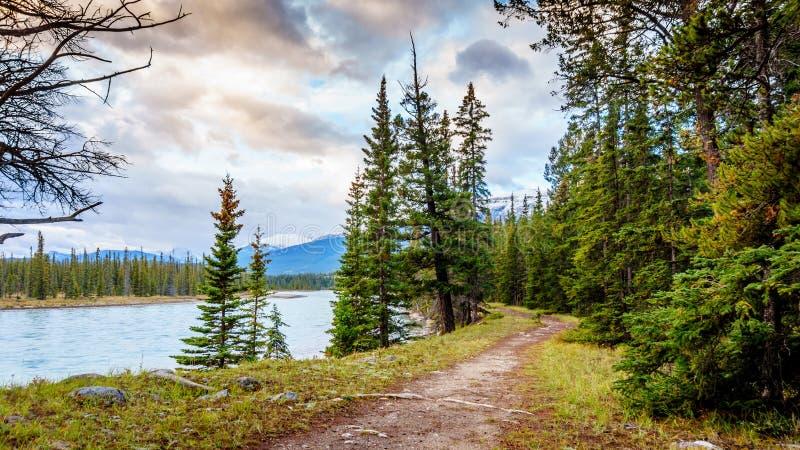 沿Athabasca河的供徒步旅行的小道 免版税图库摄影