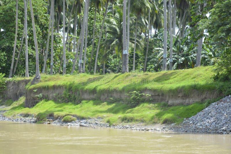 沿Bulatukan河, Tamlangon, Matanao,南达沃省,菲律宾的河岸风景 图库摄影