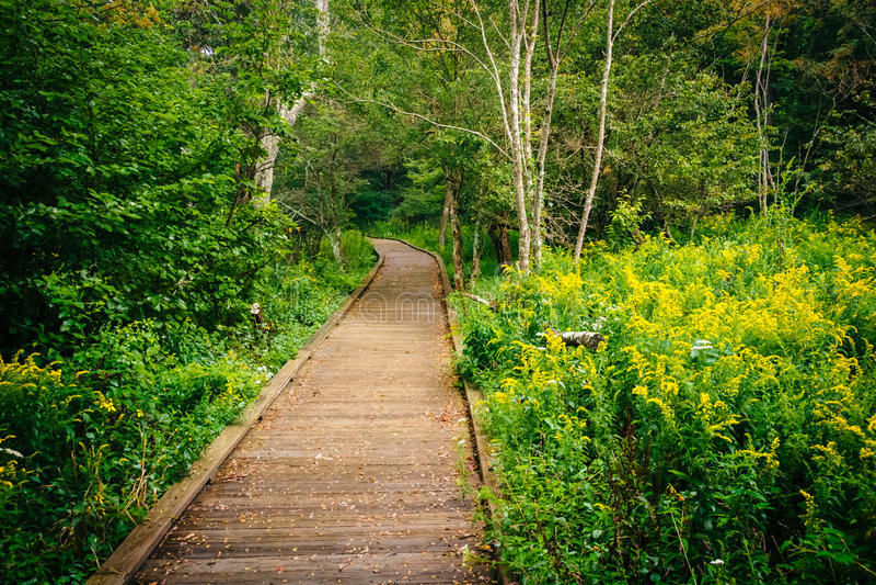 沿Limberlost足迹的木板走道道路在Shenandoah国民 库存图片