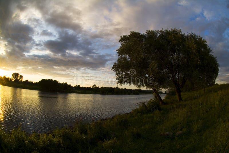 沿maas荷兰河结构树 免版税库存照片