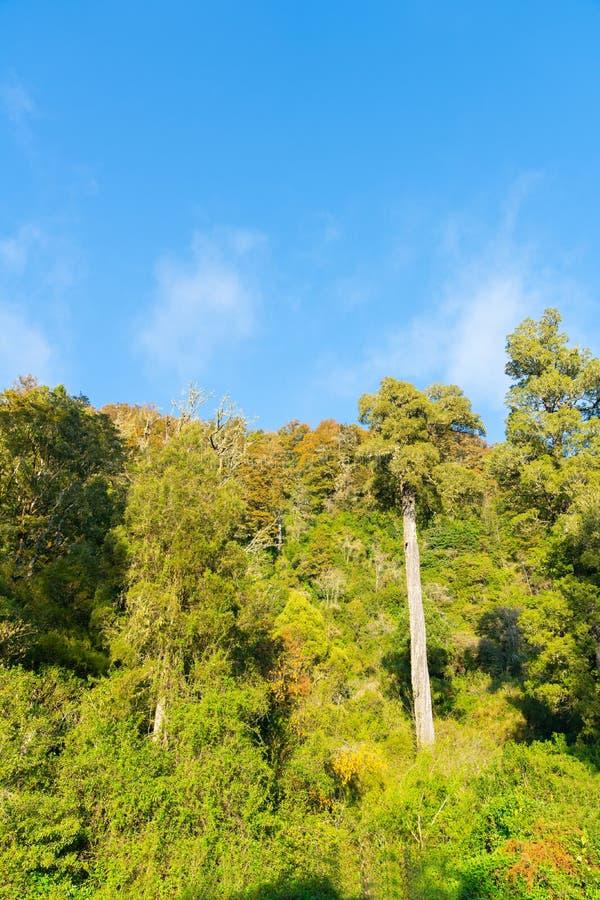 沿Matakitaki河约旦河西岸的自然新西兰灌木  免版税库存照片