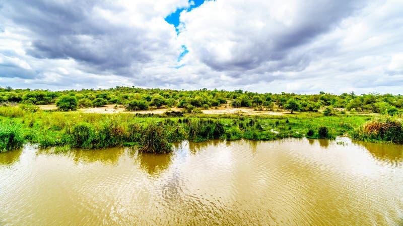 沿Olifants河的风景在克留格尔国家公园附近在南非 库存图片