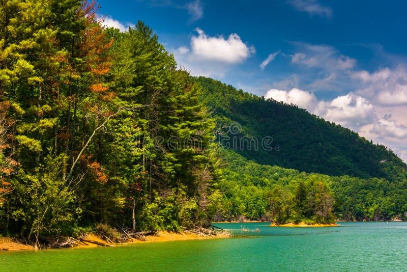 沿Watauga湖,车落基印第安人的国家森林岸的树  免版税库存图片