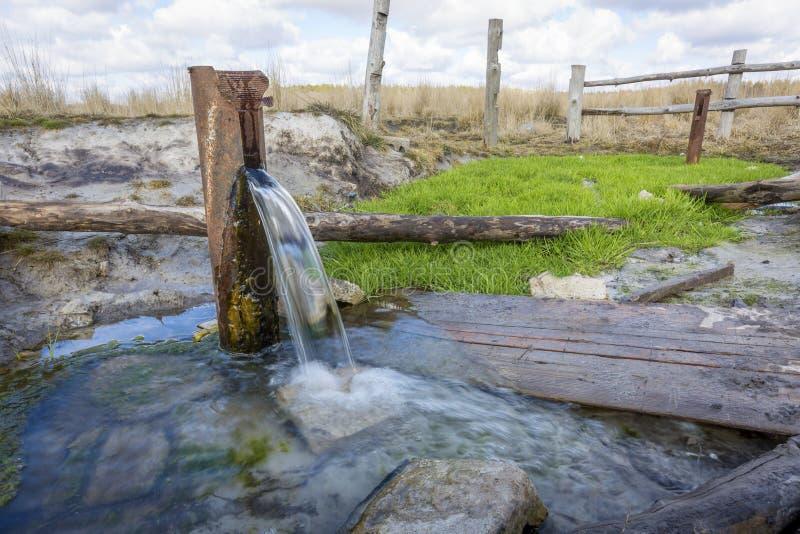 泉水的水源 免版税库存照片