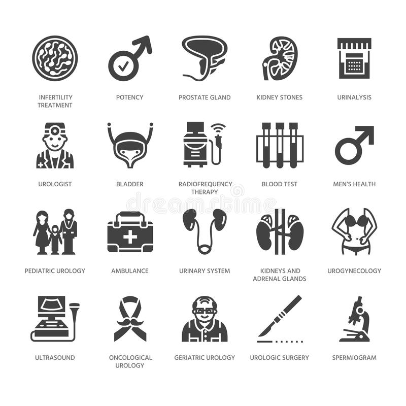泌尿学传染媒介平的纵的沟纹象 尿科医师,膀胱,肾脏,肾上腺,前列腺 诊所的医疗图表 向量例证