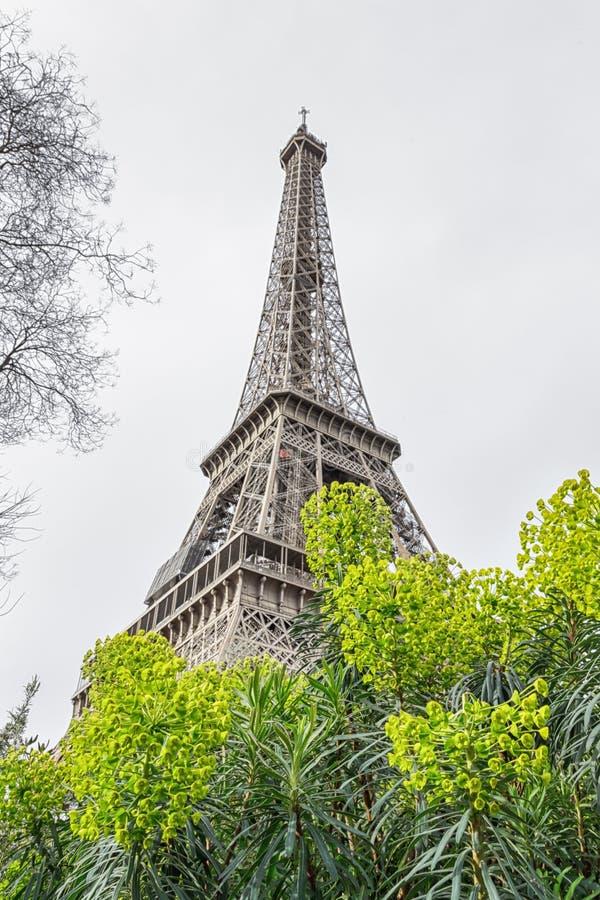 法国巴黎春天 绿色花和埃佛尔铁塔在轻的背景 免版税库存图片