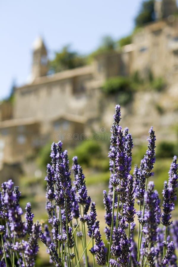 法国村庄,淡紫色花。 普罗旺斯。 免版税库存图片