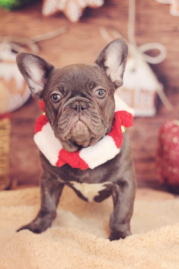 法国牛头犬圣诞节垂直 库存图片