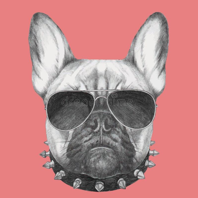 法国牛头犬画象与衣领和太阳镜的 皇族释放例证