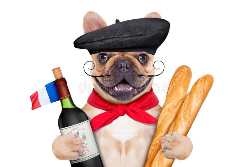 法国葡萄酒狗 免版税图库摄影