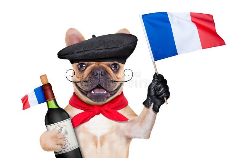 法国葡萄酒狗 库存图片