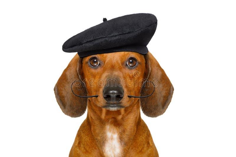 法国香肠狗 免版税库存照片