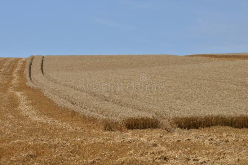 法国,在Oinville sur附近Montcient村庄的麦田  库存照片